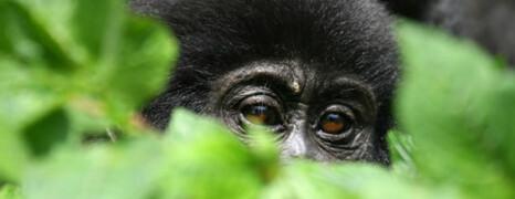 XA African Safaris